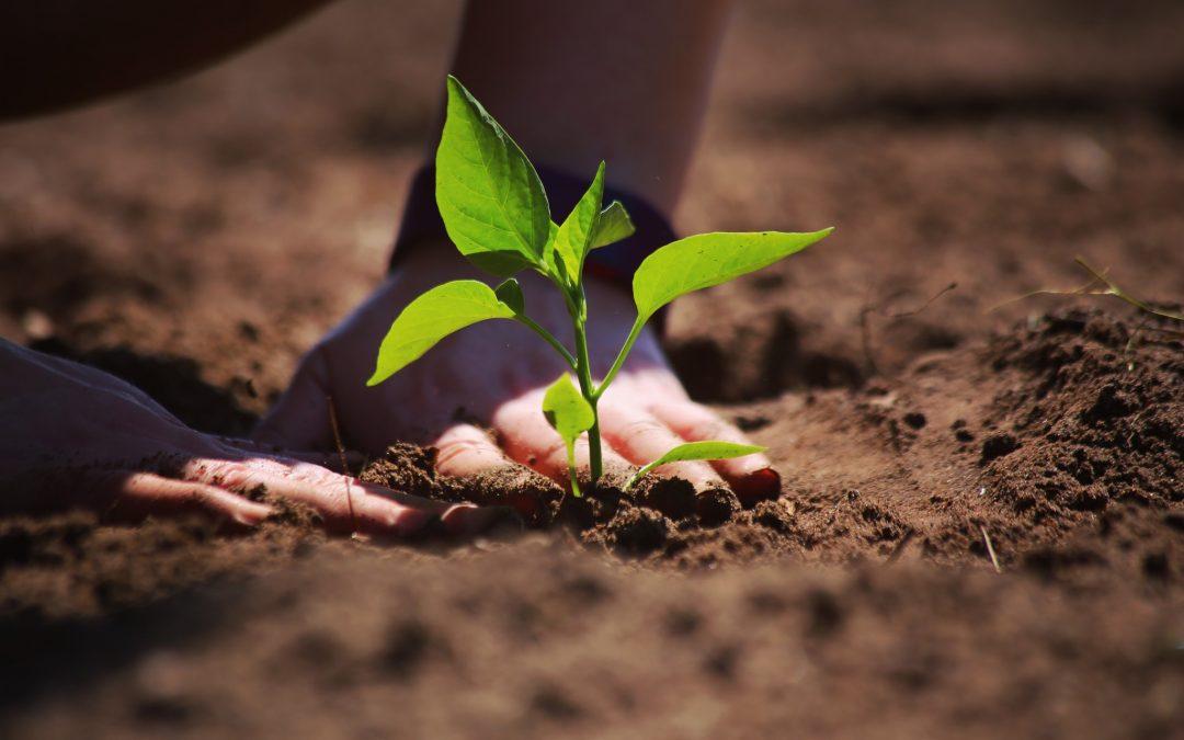 Comment créer un jardin 100 % naturel ?